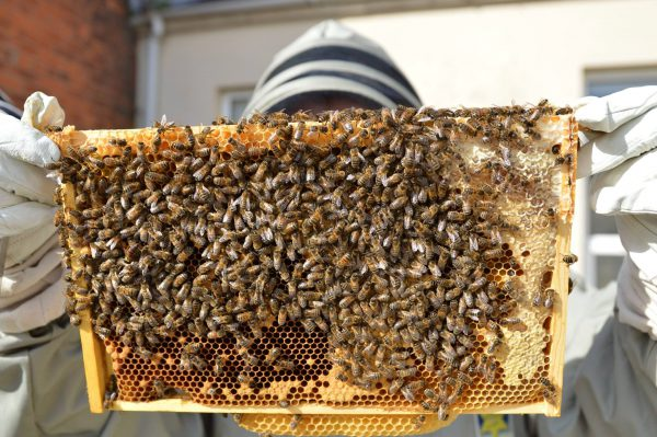 Urban Beekeeping - A Faculty Lecture @ The Green Room